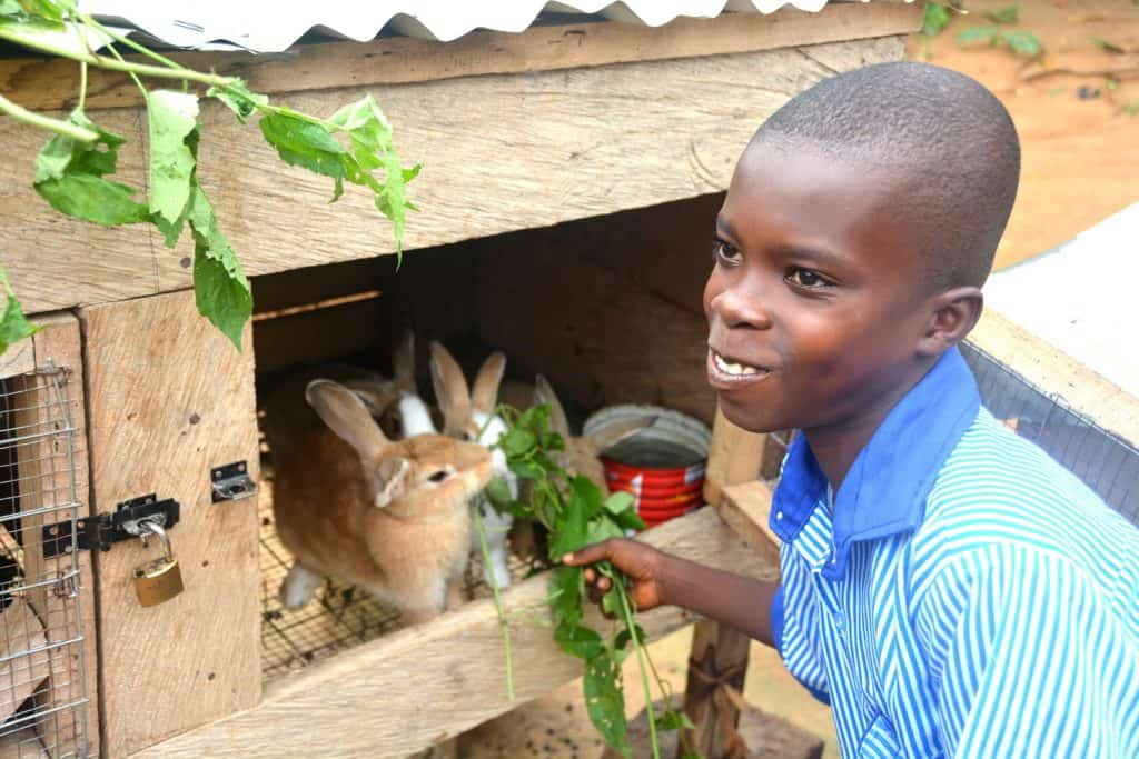 Reverend Mireku, leader of GH 312 - Shiloh Child Development Center, with 296 children, created a way for families to secure and generate an income by raising and selling rabbits in their community. He educates each child and family the basics of rearing rabbits for sale and food. This money is to help secure future and high education for the children. Through the center he teaches the importance of higher education and how to develop the business of selling rabbits. Reverend Mirekyu has also purchased through the center a plot of land in which his goals are to raise livestock and farm to benefit the center and the children.  A child, boy, youth, wearing a blue shirt, smiles as he holds his hand and gives a plant leaf, green food, feeding, taking care of, rearing, raising, rabbits, bunny, farm animal, brown and white bunny in a wooden cage, box, outside, outdoor bunny cage.  The cage is open and there is a lock on the side door.